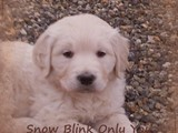 Snow Blink only you